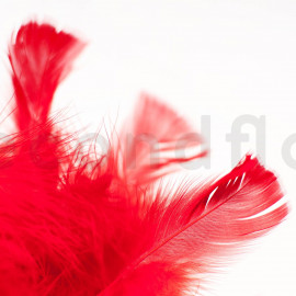 Plume - Rouge