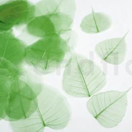 Skeleton Leaves - Boîte de 200 - Vert foncé
