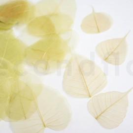 Skeleton Leaves - Boîte de 200 - Vert jaune