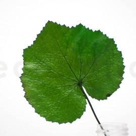 Stabilisierte Galax Blatt - Grün