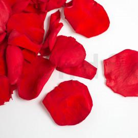 Pétales de rose stabilisés - Rouge
