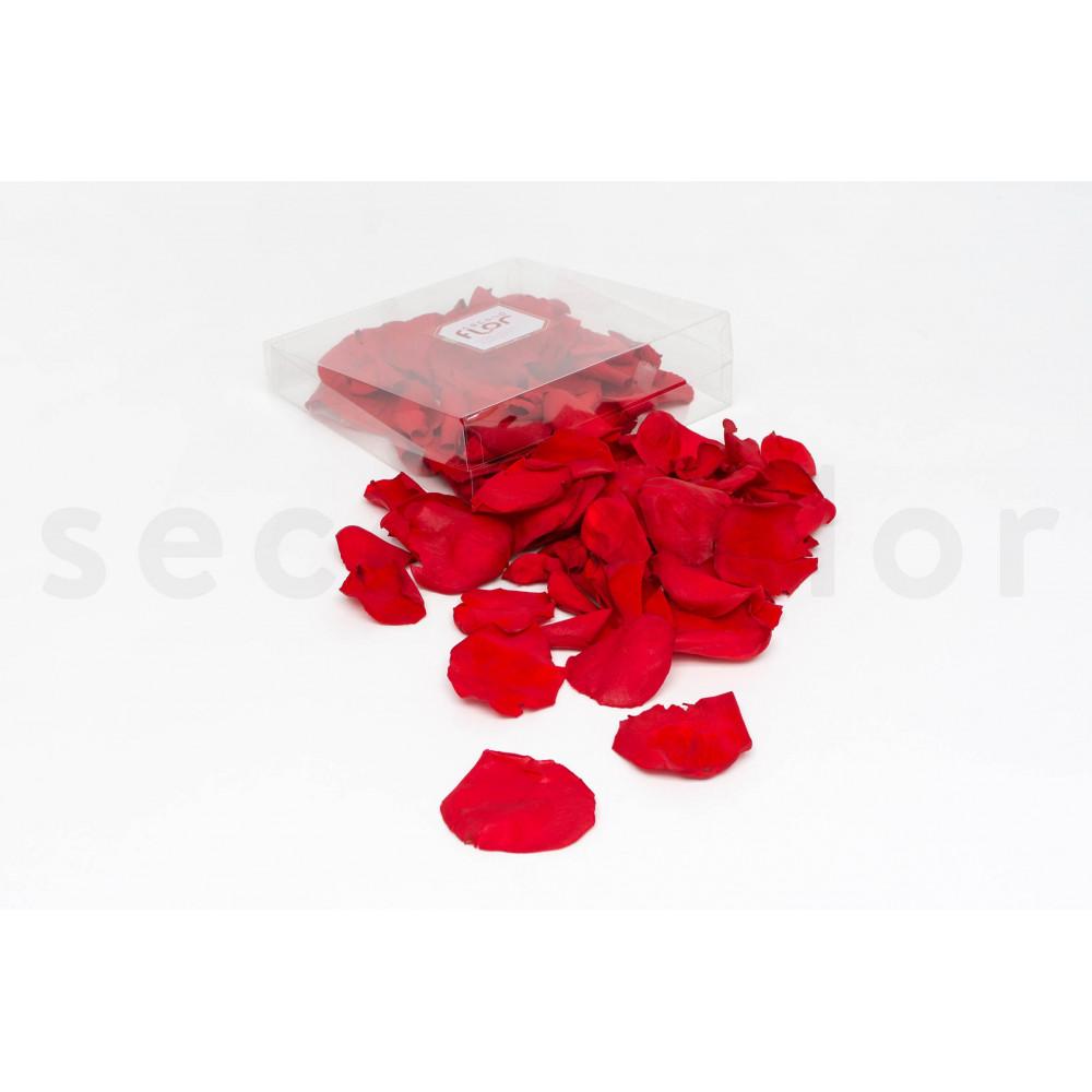 p tales de rose stabilis s rouge. Black Bedroom Furniture Sets. Home Design Ideas