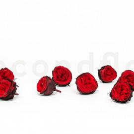 Preserved English Rose M box of 8 - Red + Dark Red
