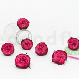 Rose Anglaise Stabilisée M - Boîte de 8 - Rose + Rose foncé