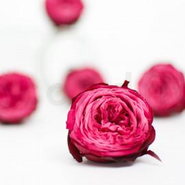 Preserved English Rose M box of 8 - Pink + Dark Pink