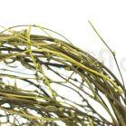Liane de Smilax stabilisée - Vert