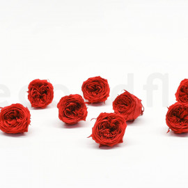 Preserved English Rose L box of 8 - Red