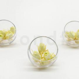Bouton de rose Stabilisée XS - Boîte de 20 - Vert clair