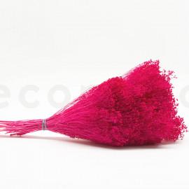 Broom préservé - Rose Fuchsia