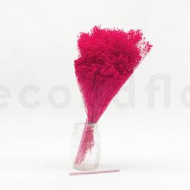 Broom stabilisé - Rose Fuchsia