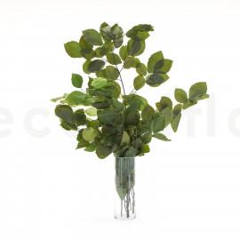Hêtre Stabilisé - Vert