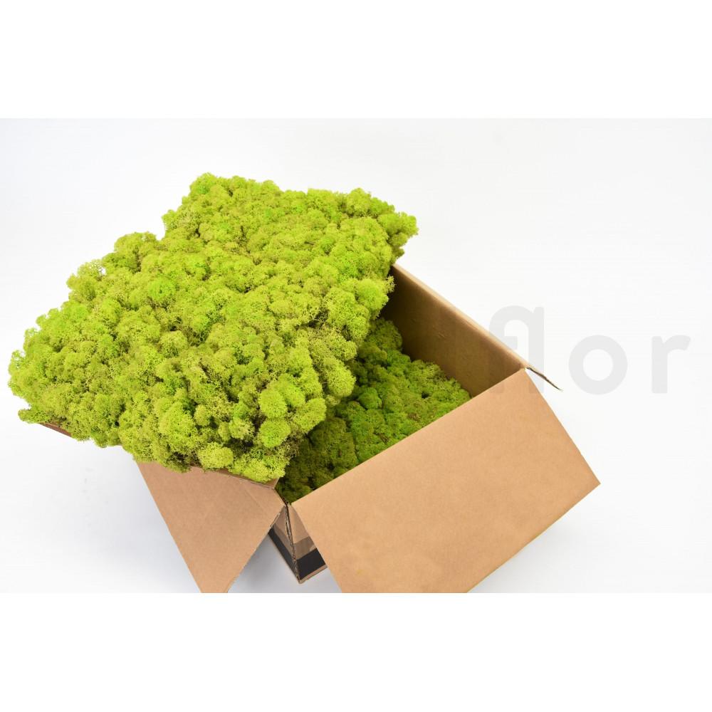 lichen vert citron stabilis secondflor. Black Bedroom Furniture Sets. Home Design Ideas