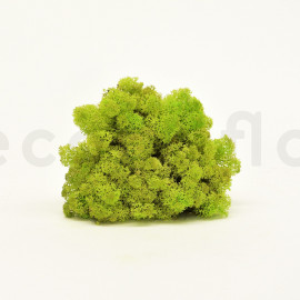 Preserved Scandinavian Lichen / 6.6 lbs - Lime Green