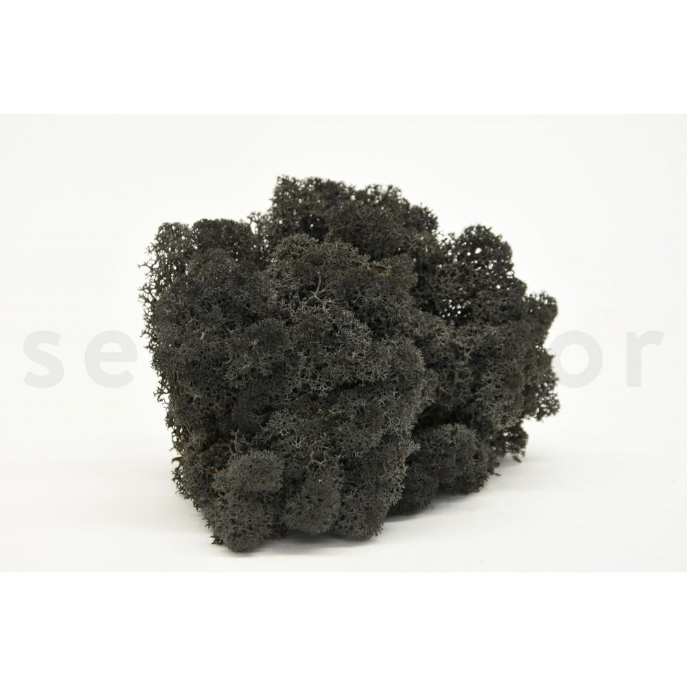 lichen noir stabilis secondflor. Black Bedroom Furniture Sets. Home Design Ideas