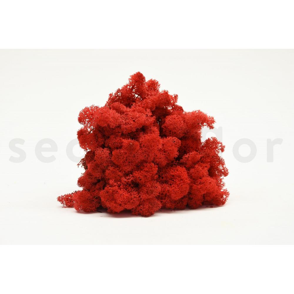lichen rouge stabilis naturel second flor. Black Bedroom Furniture Sets. Home Design Ideas