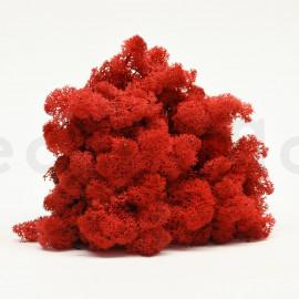 Lichen Scandinave Stabilisé / 3 Kg - Rouge