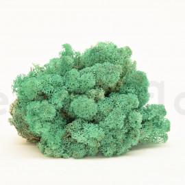 Preserved Scandinavian Lichen / 6.6 lbs - Pacific
