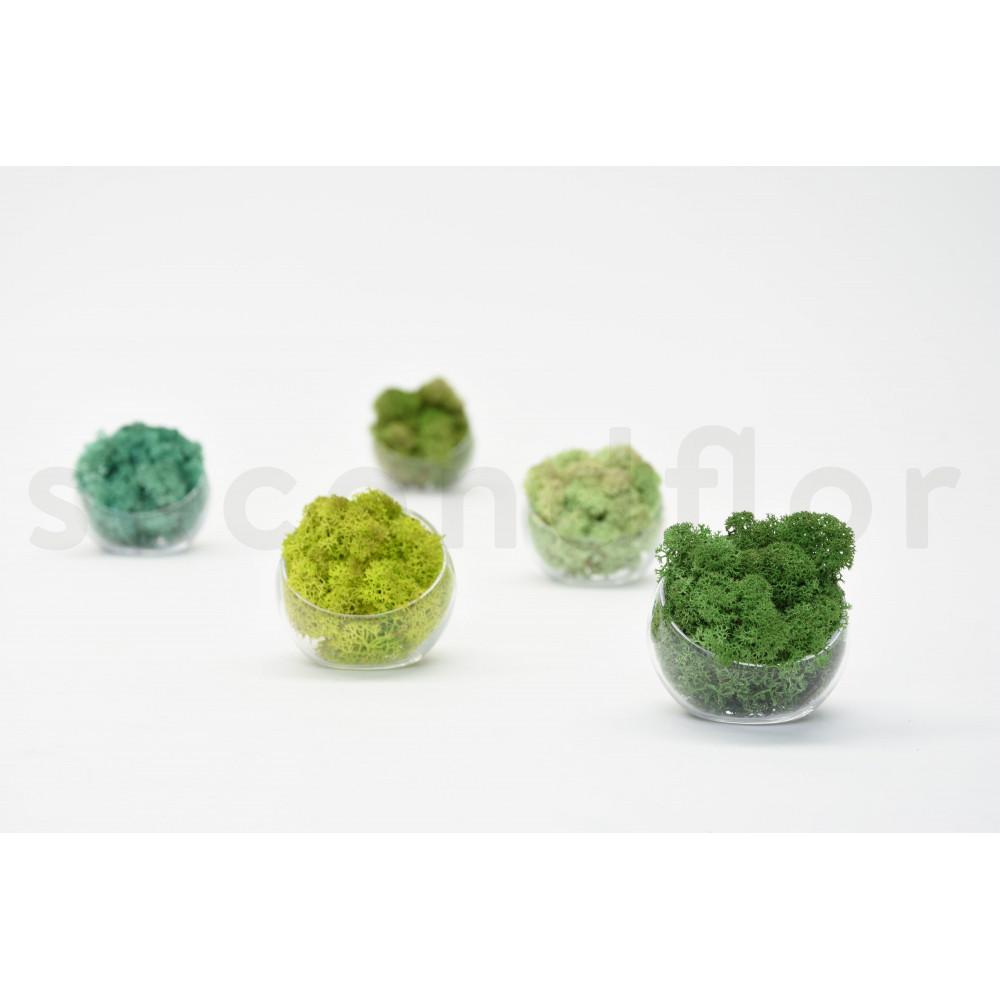 lichen pacific stabilis secondflor. Black Bedroom Furniture Sets. Home Design Ideas