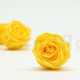 Preserved rose Verdissimo Extra - box of 6 - Yellow