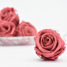 Preserved rose Verdissimo Extra - box of 6 - Vintage Dark Pink