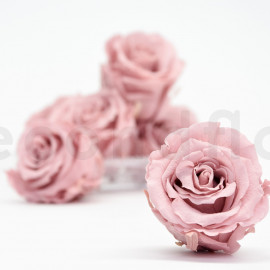 Preserved rose Verdissimo Extra - box of 6 - Cherry blossom