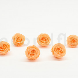 Preserved rose Verdissimo Extra - box of 6 - Peach