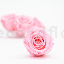Preserved rose Verdissimo Extra - box of 6 - Light Pink
