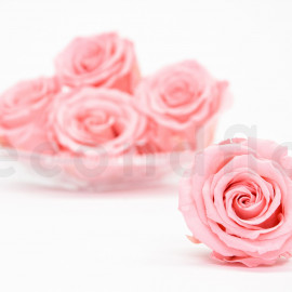 Preserved rose Verdissimo Extra - box of 6 - Vintage Light Pink