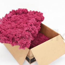 Preserved Scandinavian Lichen - 6.6 lbs - Pink