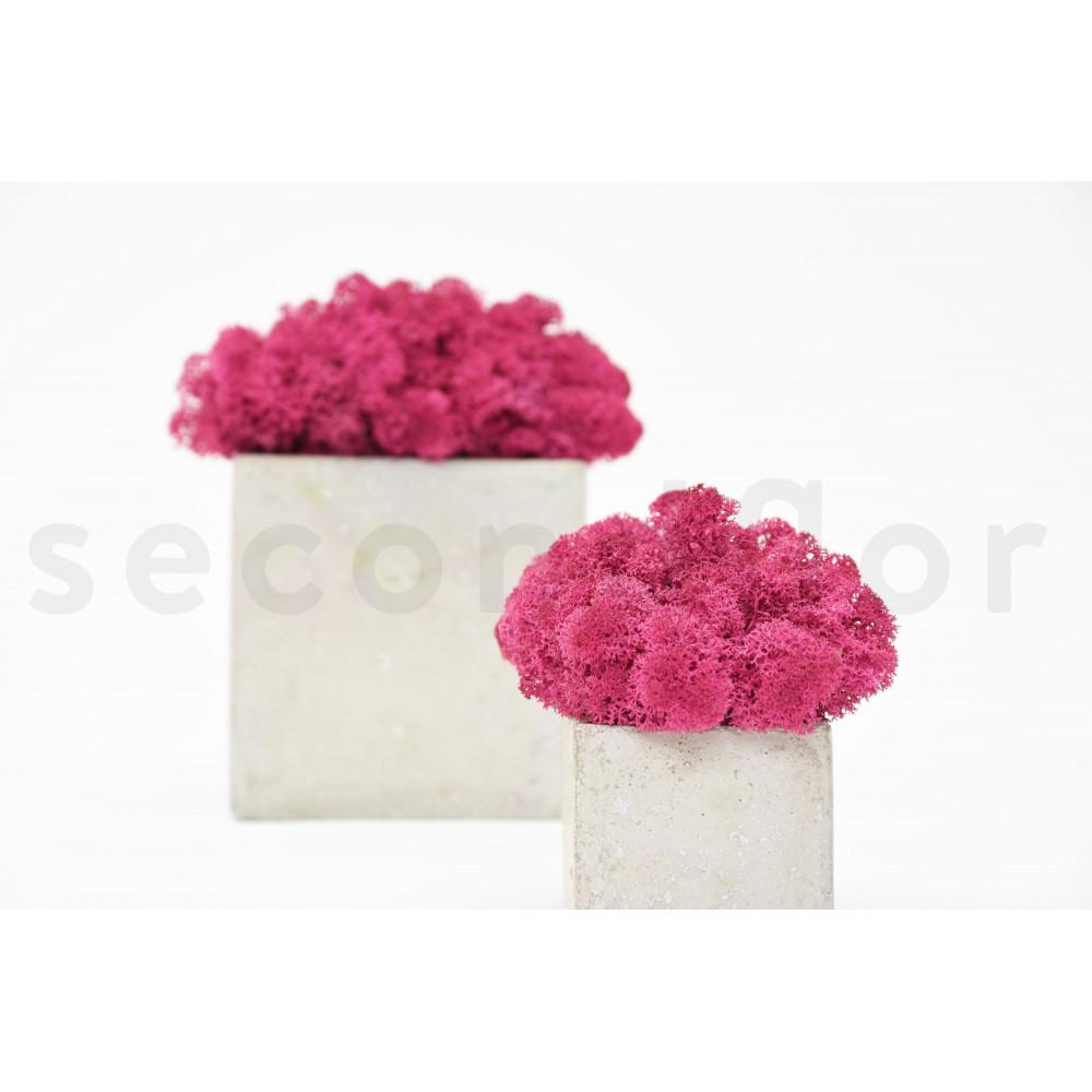 lichen rose stabilis secondflor. Black Bedroom Furniture Sets. Home Design Ideas