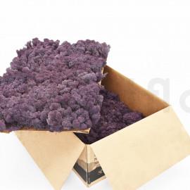 Lichen Scandinave Stabilisé / 3 Kg - Violet