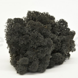 Preserved Scandinavian Lichen - 1.1 lb - Black