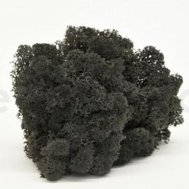 Lichen Scandinave Stabilisé / 500 Gr - Noir
