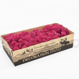 Lichen Scandinave Stabilisé / 500 gr - Rose