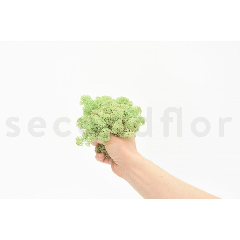 500 gr lichen scandinave mint stabilis. Black Bedroom Furniture Sets. Home Design Ideas
