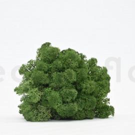 Preserved Scandinavian Lichen - 1.1 lb - Forest Green