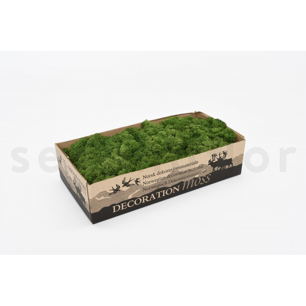 500 gr lichen scandinave vert nature stabilis. Black Bedroom Furniture Sets. Home Design Ideas