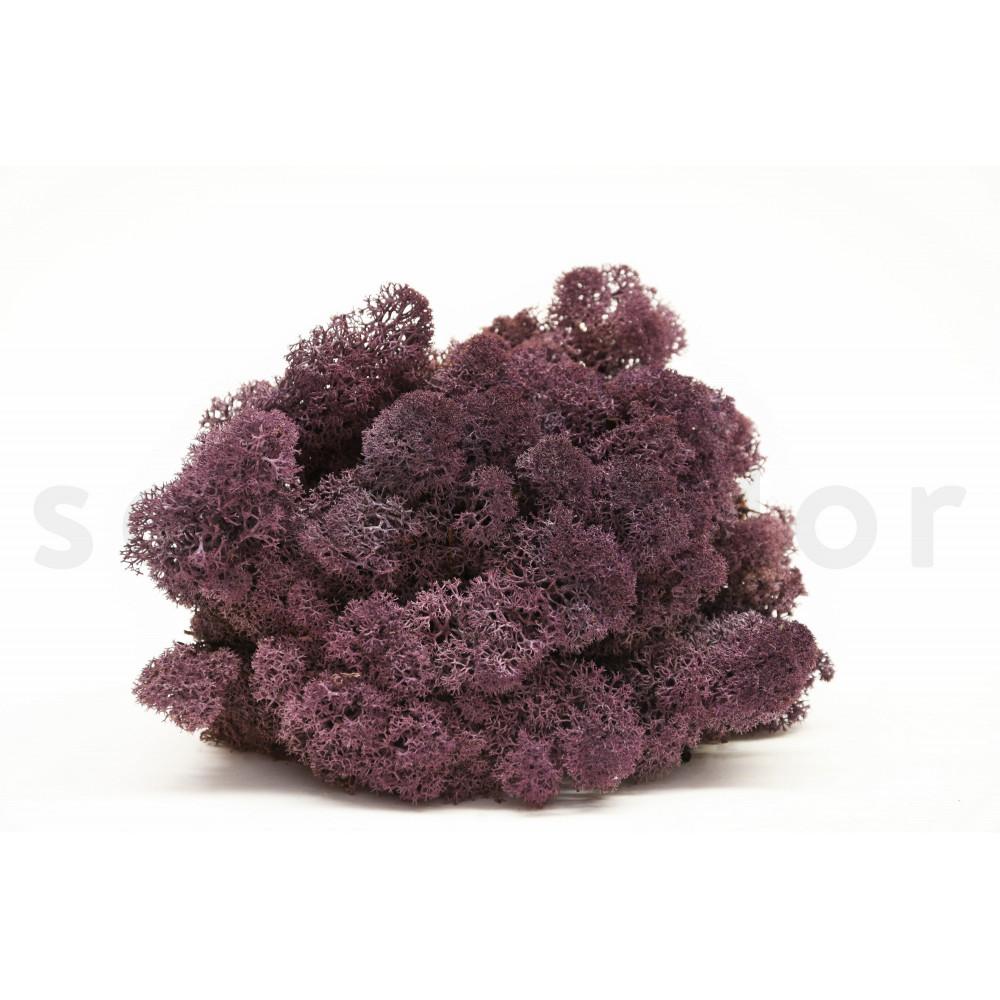 lichen scandinave violet stabilis. Black Bedroom Furniture Sets. Home Design Ideas