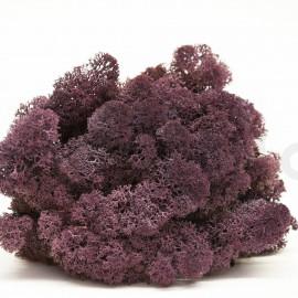 Lichen Scandinave Stabilisé / 500 Gr - Violet