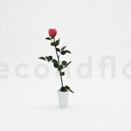 Rose sur tige stabilisée vrac L - Boîte de 1 - Rose Foncé