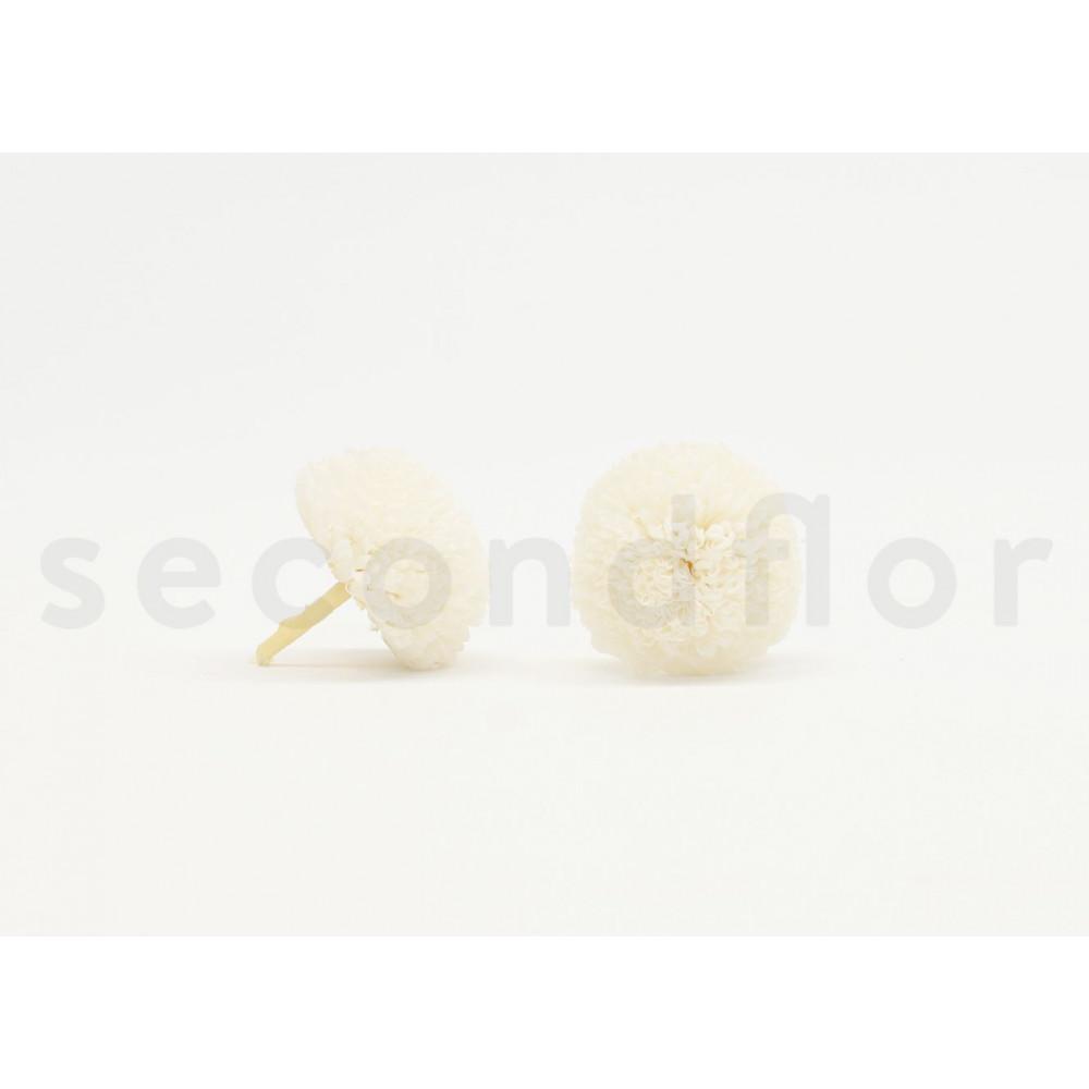 chrysanth me en boule blanc stabilis secondflor