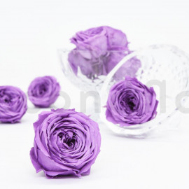 Rose Anglaise Stabilisée L - Boîte de 8 - Violet