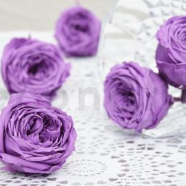 Rose Anglaise Stabilisée L boîte de 8 - Violet