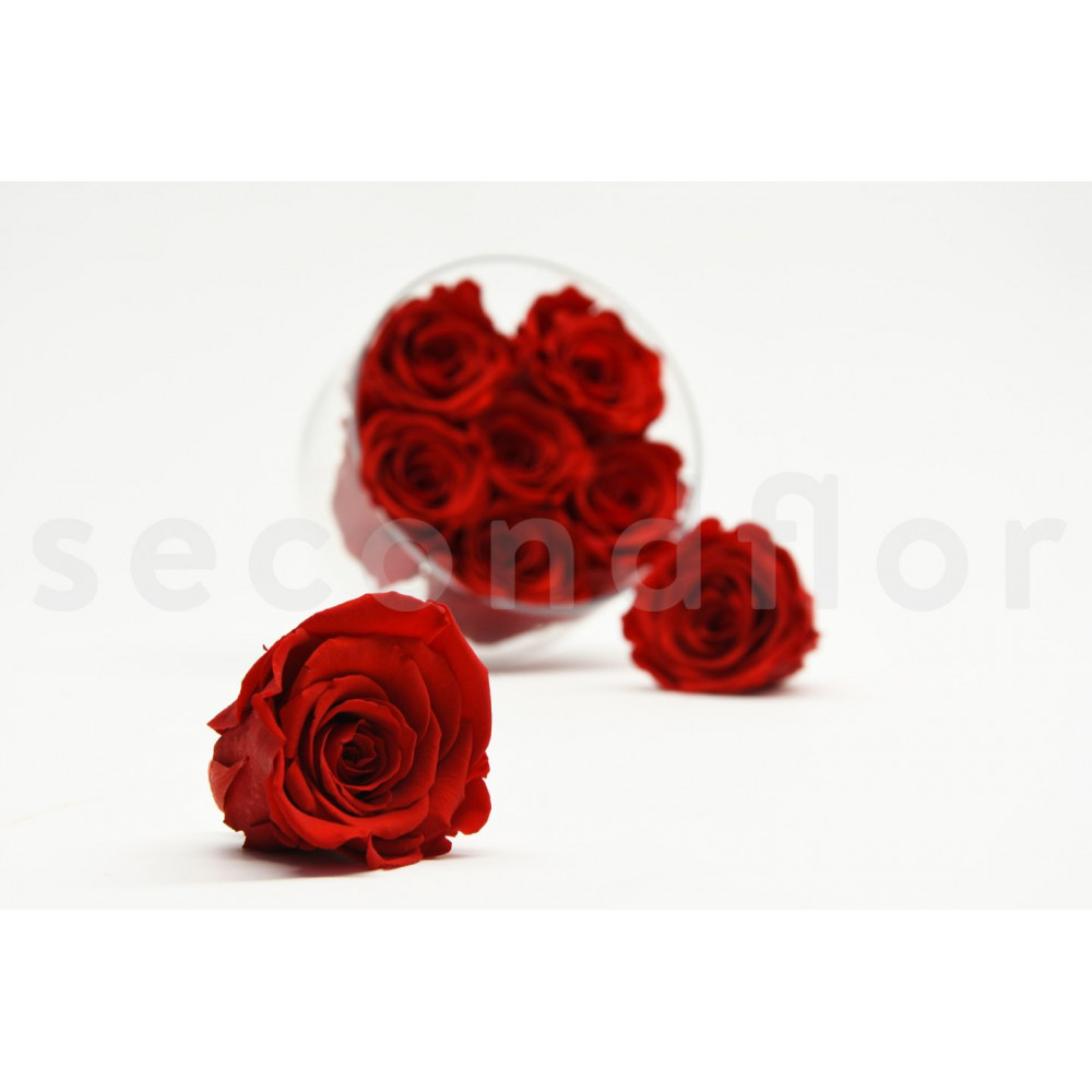 Signification rose rouge galerie tatouage - Signification rose rose ...