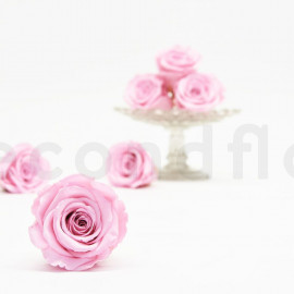 RoseAmor Preserved rose L+ - box of 6 - Light Pink