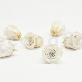 RoseAmor Preserved rose L - box of 6 - Natural White