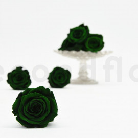 RoseAmor Preserved rose L - box of 6 - Dark Green