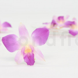 Preserved Dendrobium Orchid - M - Box of 5 - Purple + Cream