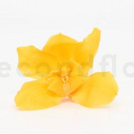 Orchidée Cymbidium Stabilisée L boîte de 4 - Jaune