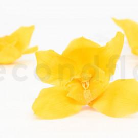 Orchidée Cymbidium Stabilisée L - Boîte de 4 - Jaune